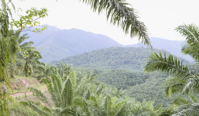 Neste is committed to combating deforestation and engage in multiple efforts to do it.