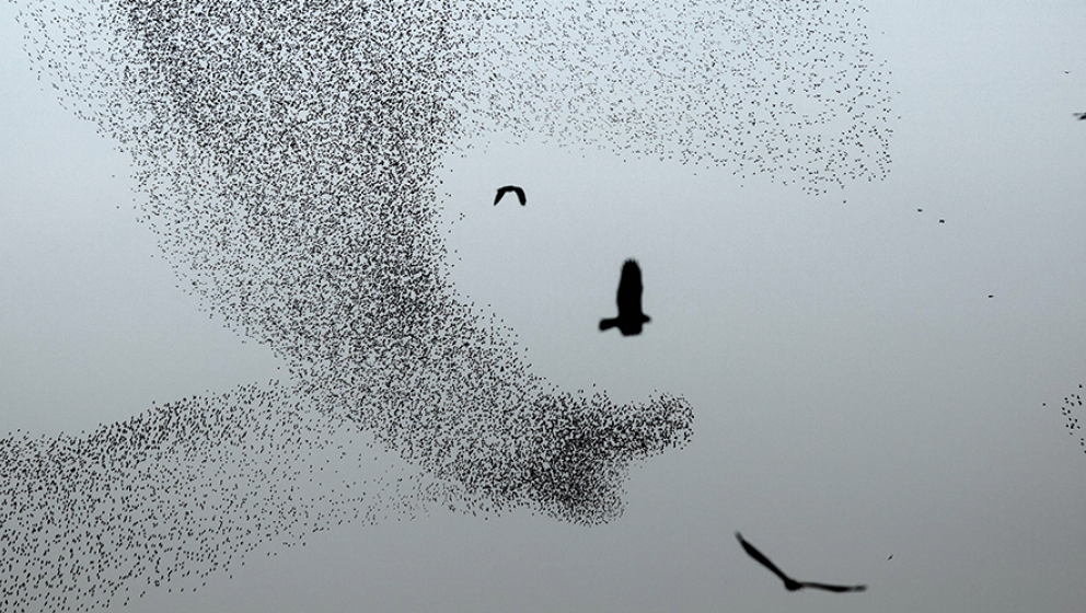 Svarta fåglar flyger över en mörk himmel